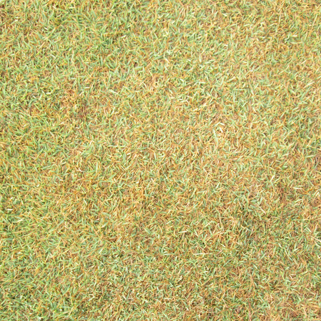 green grass and dry grass photo