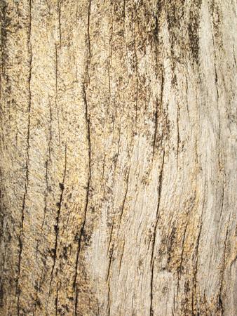texture of bark wood background photo