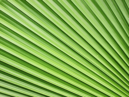 background green: beautiful palm leaf Stock Photo
