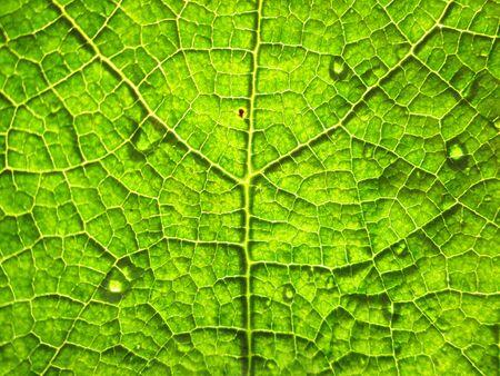 macro: water drops on green leaf macro background