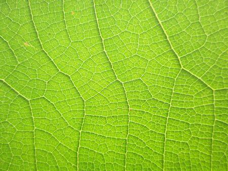 Macro pattern of green leaves