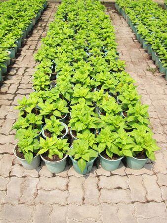 plantando arbol: Jardinera de pl�stico para la plantaci�n de �rboles en el jard�n