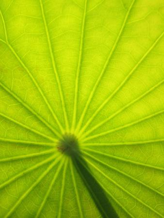From down below a lotus leaf