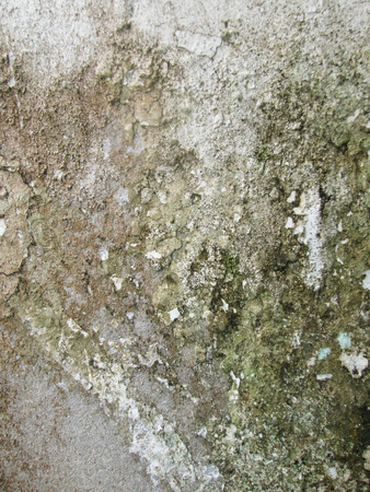 drop ceiling: grunge old moldy wall Stock Photo