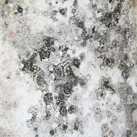 moldy: White moldy walls