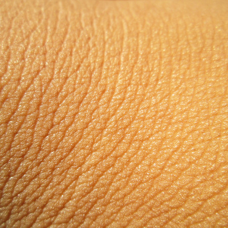 Human skin close up. Structure of Skin photo