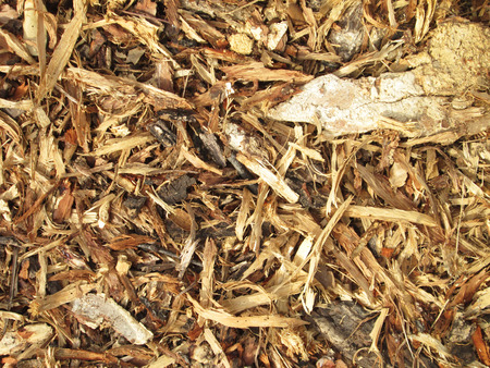 Wood chips background Imagens