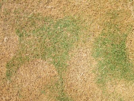 grünem Gras und trockenen Gras Lizenzfreie Bilder