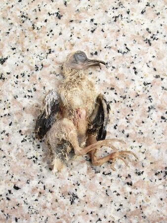 atrocity: Children of dead bird Stock Photo
