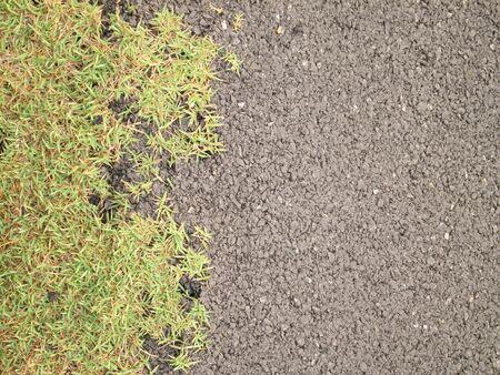 the fittest: Macro grass on asphalt road