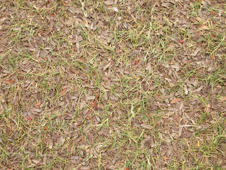 Autumn fallen leaves on the grass photo