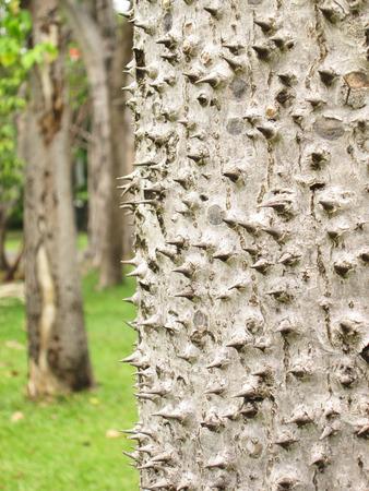 Thorny bark Stock Photo