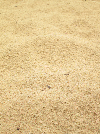 Sand background for summer. Sandy beach texture. Macro shot. Copy space
