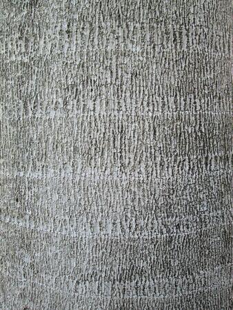 ruggedness: Palm tree close-up background