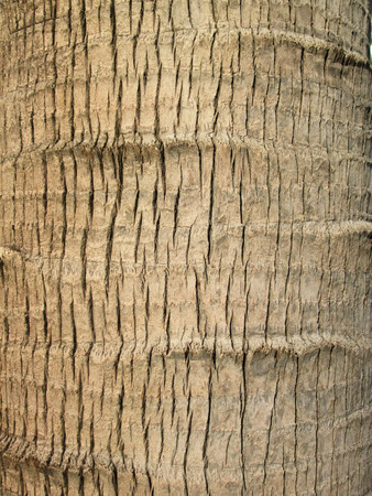 closeup of palm tree texture photo