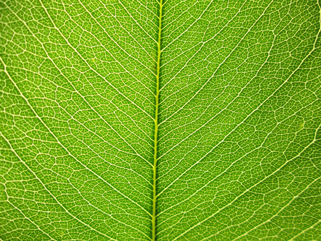 photo background: Leaf of a plant close up