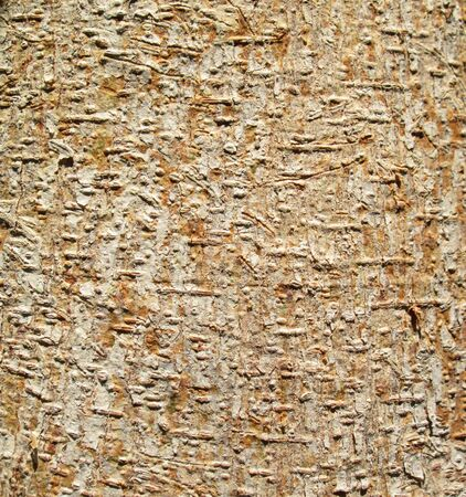 able: bark of bodhi tree