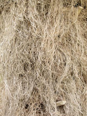 bark palm tree: Hairy palm tree bark up close
