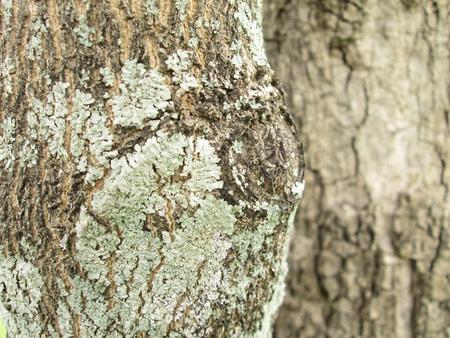 lichen: Closeup lichen on the bark Stock Photo