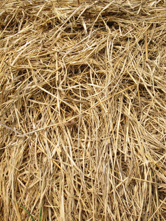 haystack: Hay background as a front view of a bale of hay as an agriculture farm and farming symbol of harvest time with dried grass straw as a bundled tied haystack