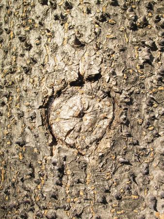 thorny: Thorny bark Stock Photo