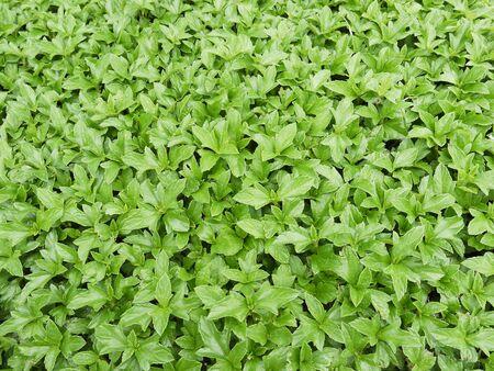 assort: green plant background
