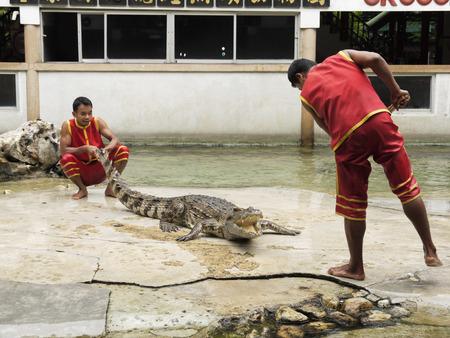 samutprakarn: SAMUTPRAKARN,THAILA ND - AUGUST 2: crocodile show at crocodile farm on August 2, 2014 in Samutprakarn,Thaila nd. This exciting show is very famous among among tourist and Thai people