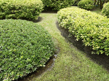 shrubs: Shrubs in the garden