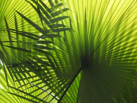 아름다운 손바닥 햇빛에 나무의 단풍 스톡 콘텐츠