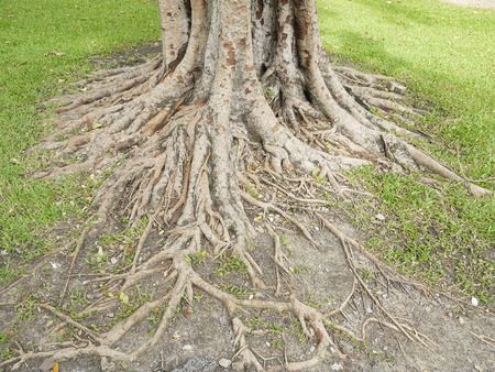 extent: The roots of the banyan forest