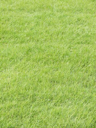 grassy plot: Green grass texture from a field
