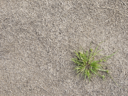 garden lawn: green grass and dry grass on the ground Stock Photo