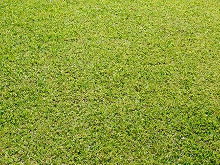 grassy plot: green grass lawn texture Stock Photo