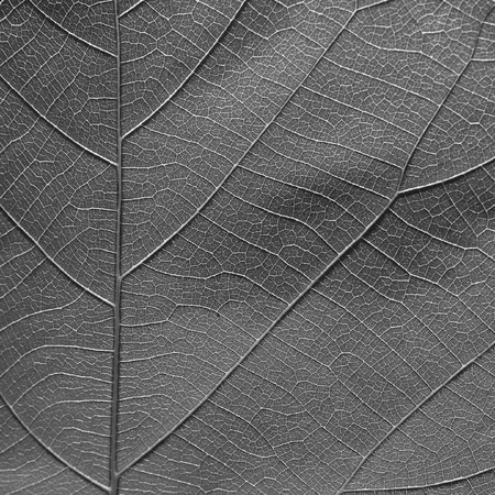 leaf texture: gray leaf texture Stock Photo