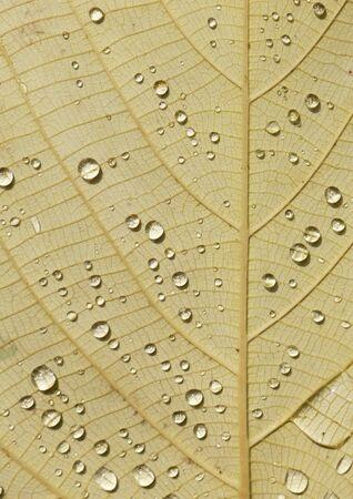 water fall: water drop on yellow leaf in fall season