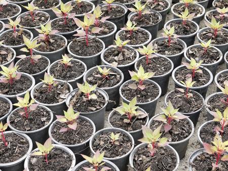 plantar árbol: Jardinera de pl�stico para la plantaci�n de �rboles en el jard�n