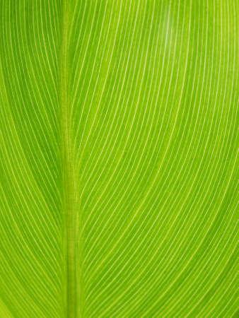 asymmetry: leaf texture