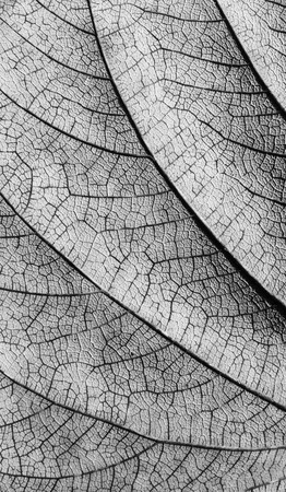 gray leaf texture Stock Photo