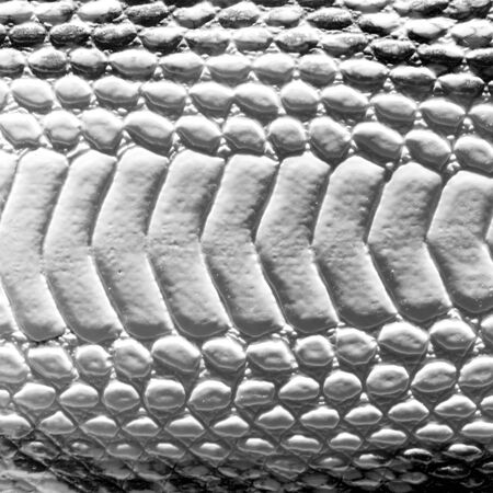constrict: gray snake texture or backgrond
