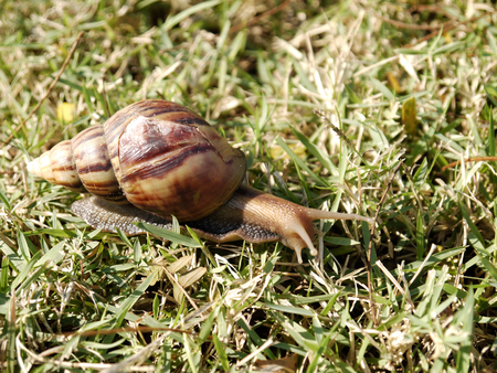 slithery: snail in the garden on the grass
