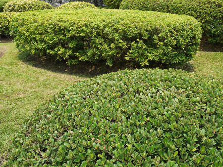 touraine: Shrubs in the garden