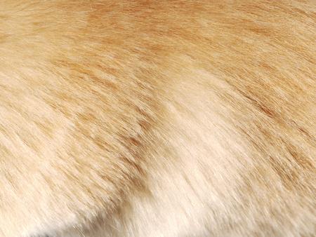 textura pelo: Macro textura del pelo de perro