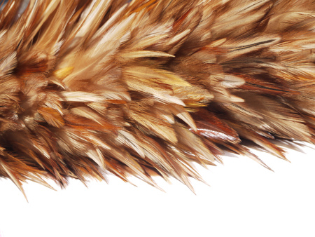 broom handle: Soft feather broom on isolated background. Duster brush isolated background. Cleaner dust hand tool. Broom dust with handle. Cleaning brush tool. Feather broom duster. Cleaner furniture