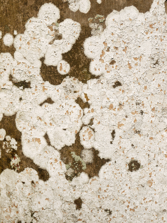 bark palm tree: lichens on palm tree bark background Stock Photo