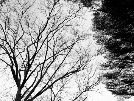 haunt: Silhouette of tree. Black and white