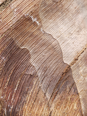 bark palm tree: palm tree bark background