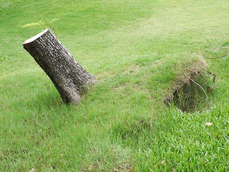 displace: Tilt the broken tree root