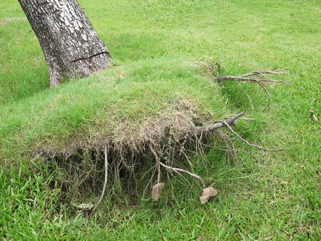 Tilt the broken tree root