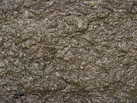 muck: Mud texture or wet brown soil as natural organic clay and geological sediment mixture as in roughing it in a dirty muddy country road bog after the rain or rainy season found in a damp moist climate