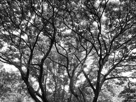 haunt: Silhouette tree